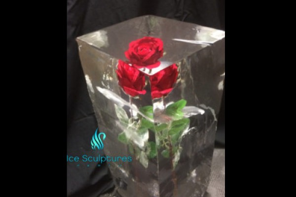 rose-in-ice-55F660AE3-E2A4-3BE4-ABBE-3739EE0B85F7.jpg