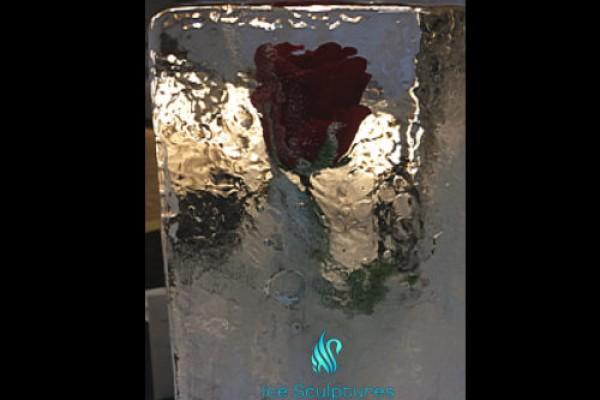 rose-in-iceB461E0D0-3EE8-DE30-2BC1-DC539E649575.jpg